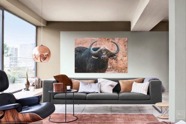Print Buffel in Zuid-Afrika
