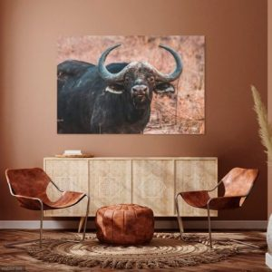 Print Buffel in Zuid-Afrika